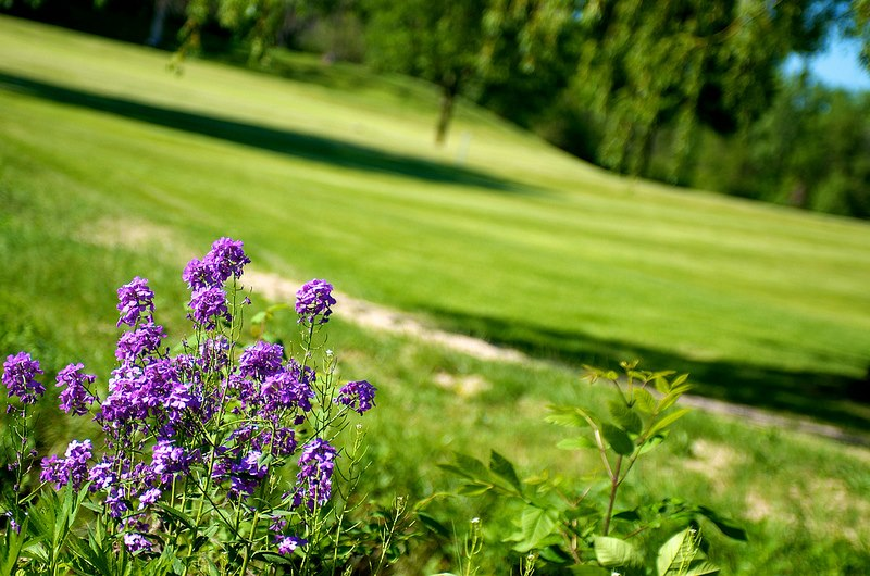 Flint & Genesee Golf Courses