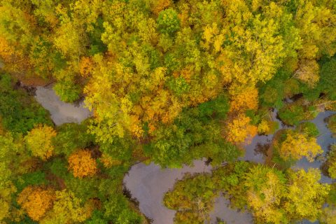 Experience Fall Colors in Flint & Genesee